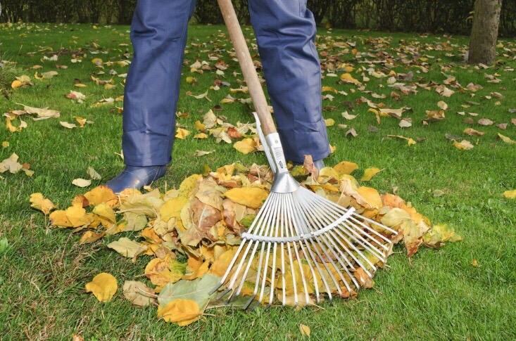 Tips for Looking After Your Lawn Naturally