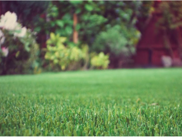 7 Ways To Revitalize A Dull Garden